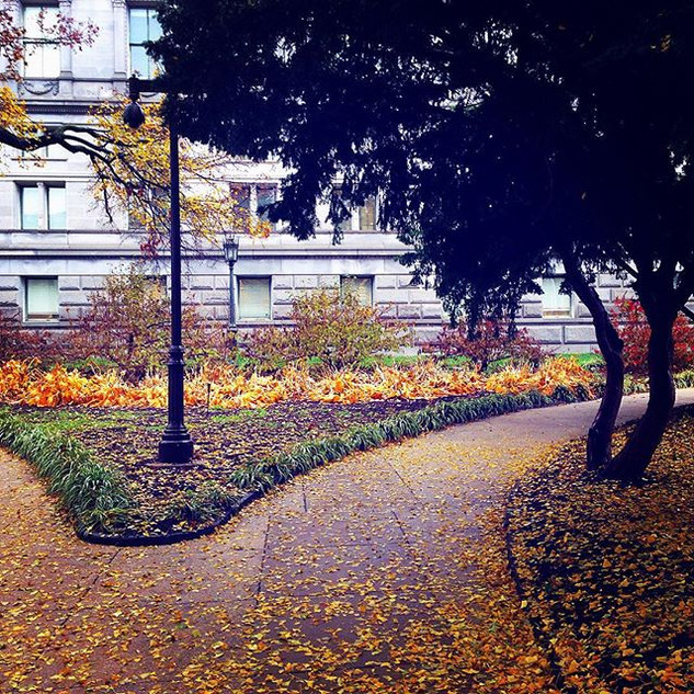 Fall at the Library