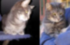 Casper and Felix the Twin Cats