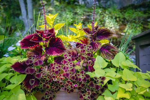pg_tinkerhill_flowers.jpg