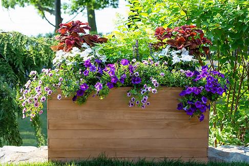 pm_50birthday_planter.jpg