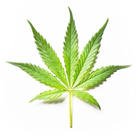 marijuana-leaf-1-1.jpg
