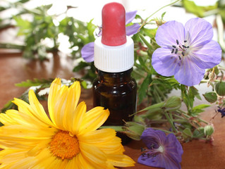 Why Do Plants Produce Essential Oils?