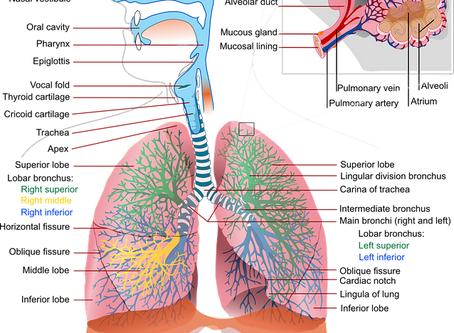 Asthma: What Is It and What Could Help?