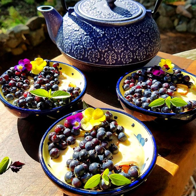 Fresh Blueberry Coconut Pudding