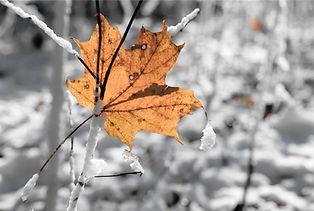 Winter Photo.jpg