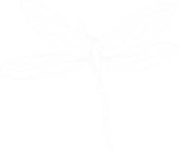 little-dragonfly copy1.png