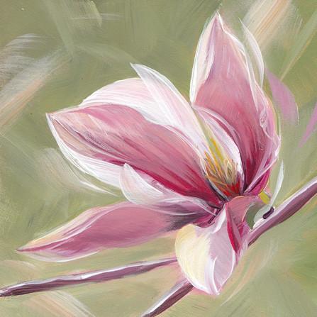 Magnolia Majesty