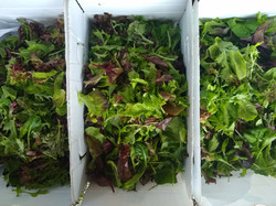 wholesale_greens
