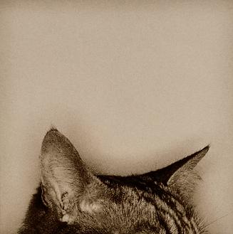 Cat thumb.png