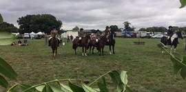 The ponies line up.jpg