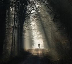 Wald, Nebel, Bike