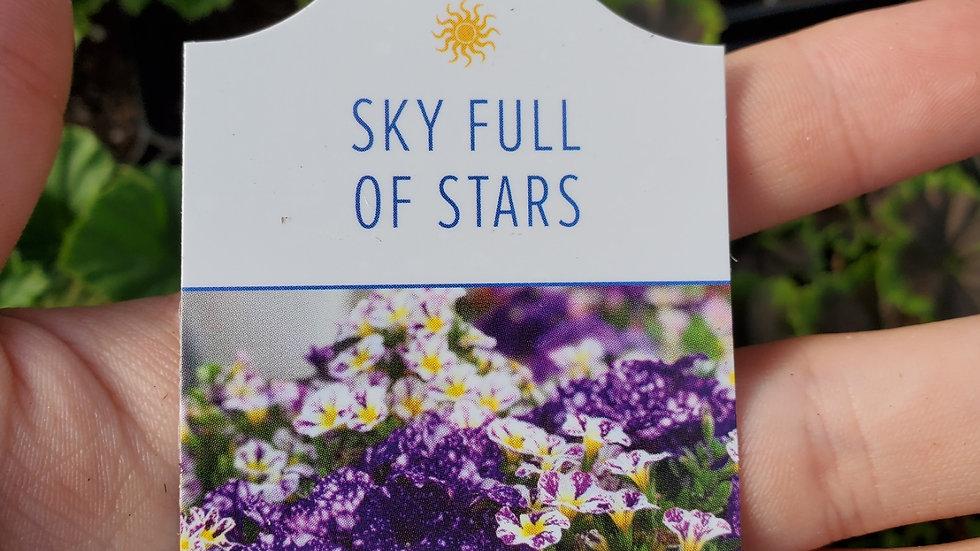 Hanging Basket- Sky Full of Stars