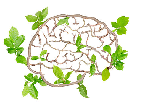 Plants with leaves forming brain isolate