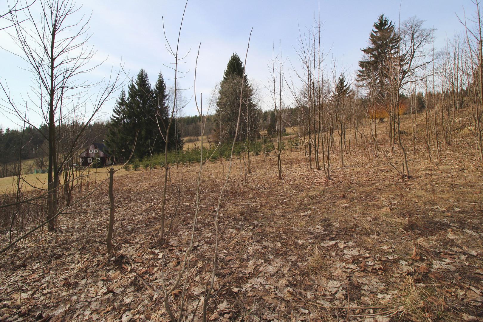 Pozemek na prodej v Jizerských horách, Rejdice