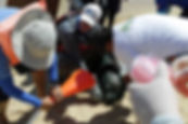 Taller-de-desenmalle-lobos-marinos-Los-C