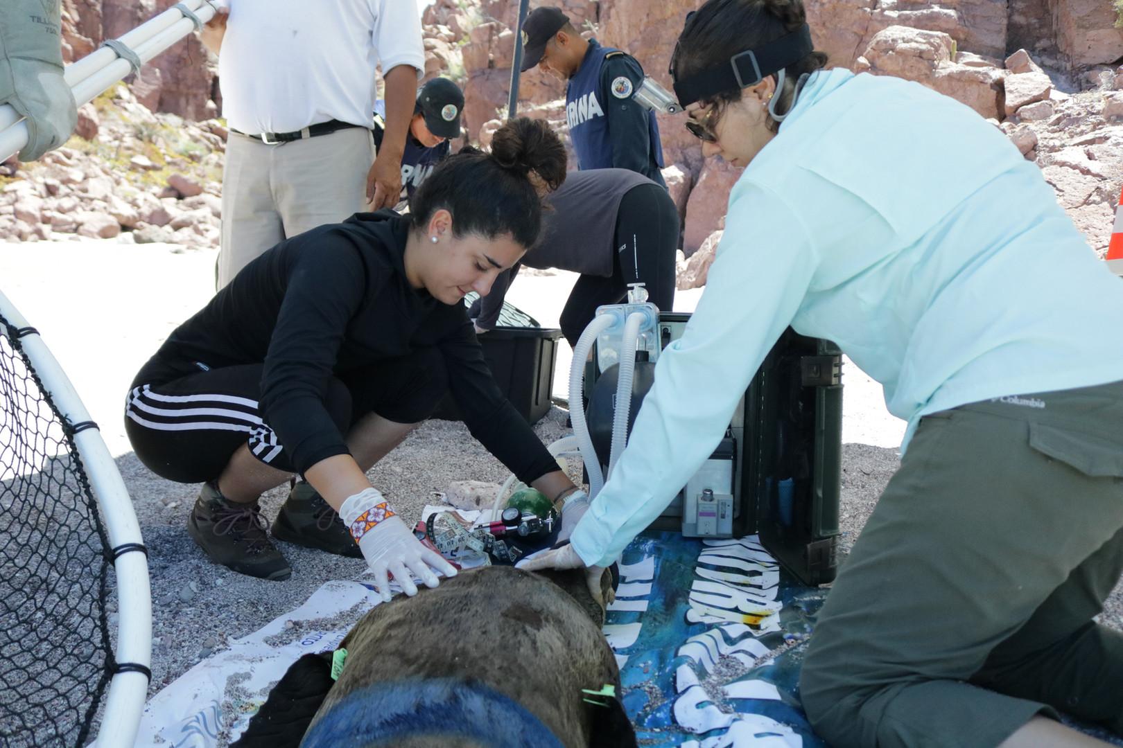 Voluntariado de veterinaria