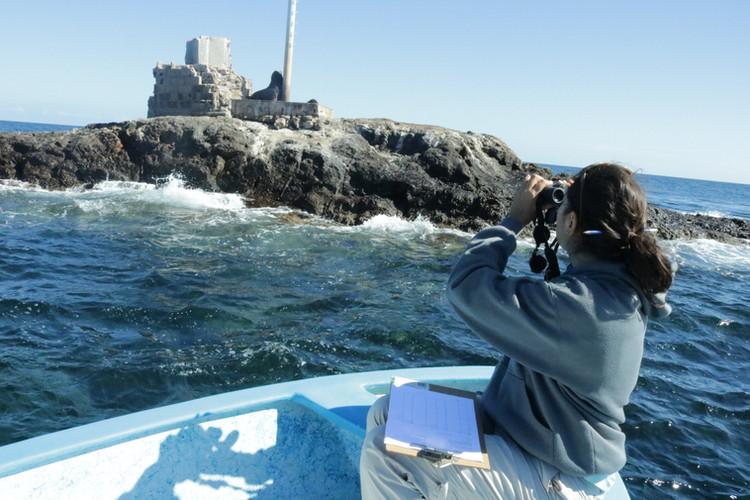 Realizando monitoreo en La Reinita, Isla Cerralvo
