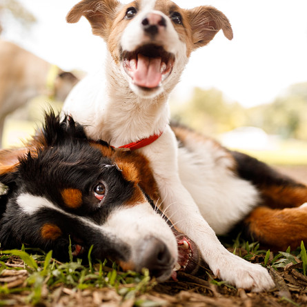 PR: New Plan for the Dog Park Behind the SACC