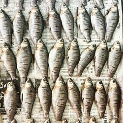 Cambodian fishs