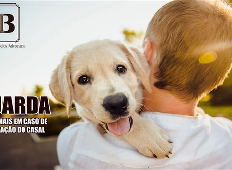 Quem ficará com o animal de estimação após o divórcio?