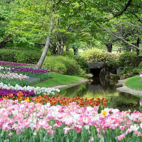 Walking in the Garden of Faith