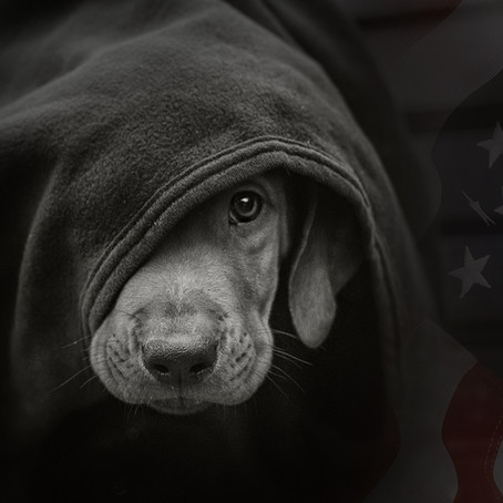 """VA Hospital Running """"Maximum Pain Experiments"""" on Dogs and Puppies"""