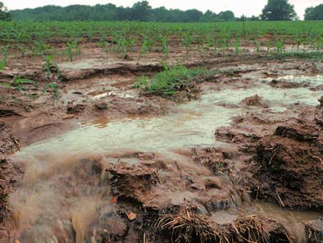 Notre surconsommation d'engrais azotés de synthèse est un désastre écologique, social et économique