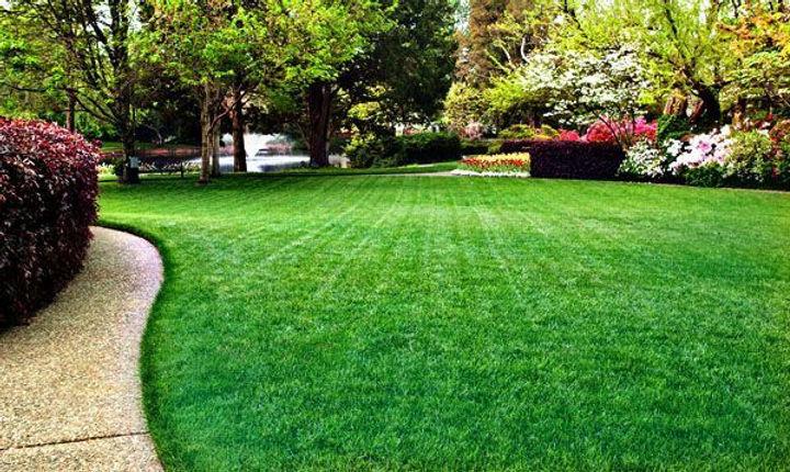 Green_grass_lawn.jpg