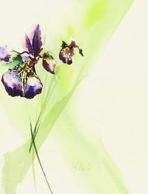 Siberian Iris II