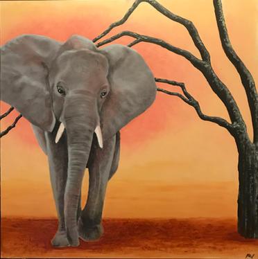 Quiet Elephant