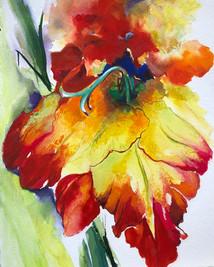 Roja Gladiolus Aflame