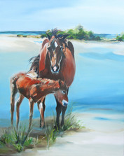 Summer Foal on Shackleford Banks