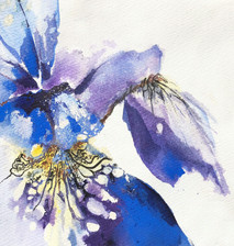 Siberian Iris I