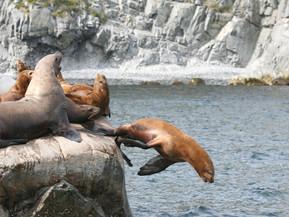 Marvelous Sea Lions!