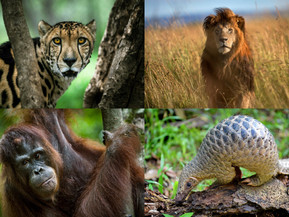 Happy National Endangered Species Day!