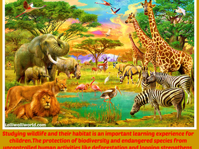 Why is Wildlife Conservation Important Today?