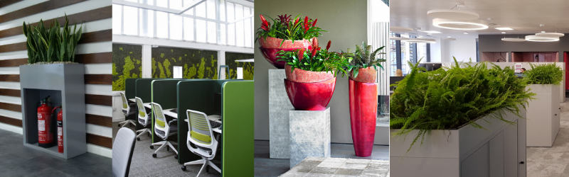 Office interiors with houseplants