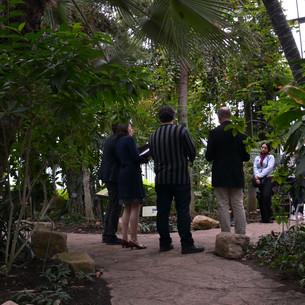 Tarentule concert jardin botanique