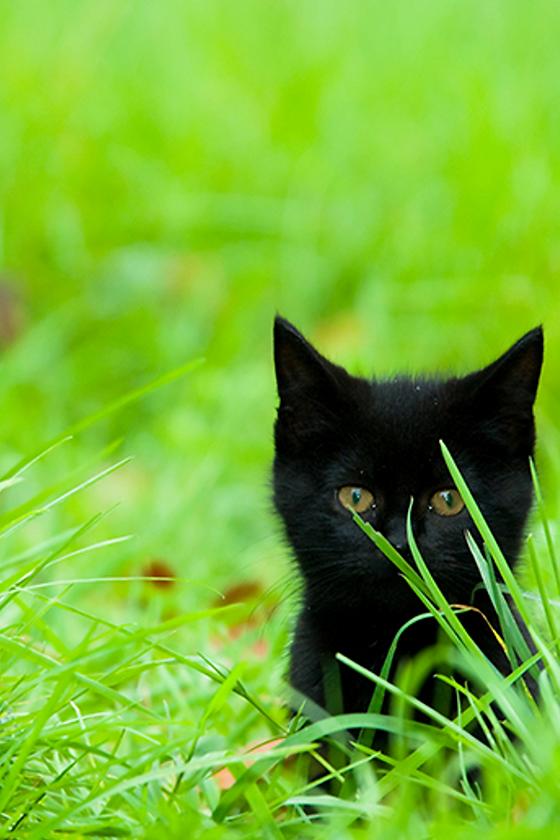 green cat ad.png
