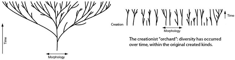 Evolution vs creation. Common descent vs variation in a kind.