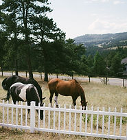 herd2.jpg