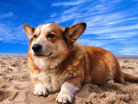 Cani in spiaggia senza traumi: come garantire loro un'esperienza piacevole