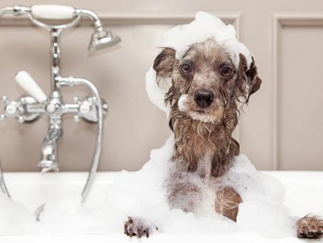 Shampoo per Cani: i vantaggi di un prodotto senza risciacquo