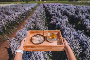 ฟาร์มดอกไม้ไทยเลื่องชื่อ นี่หรือประเทศไทย