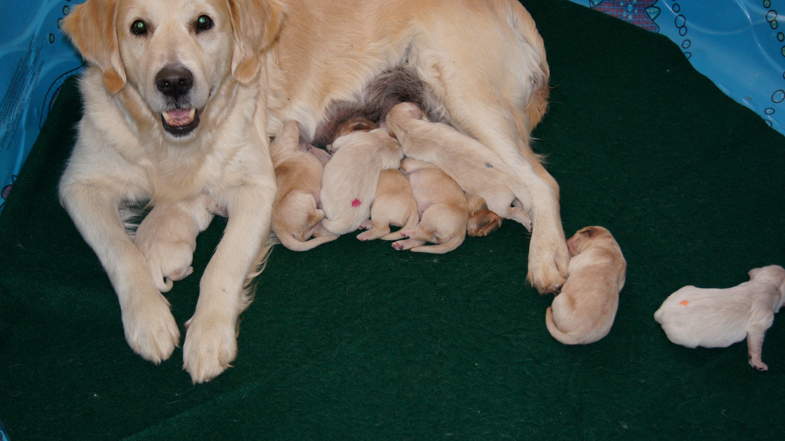 Sloane & Puppies!