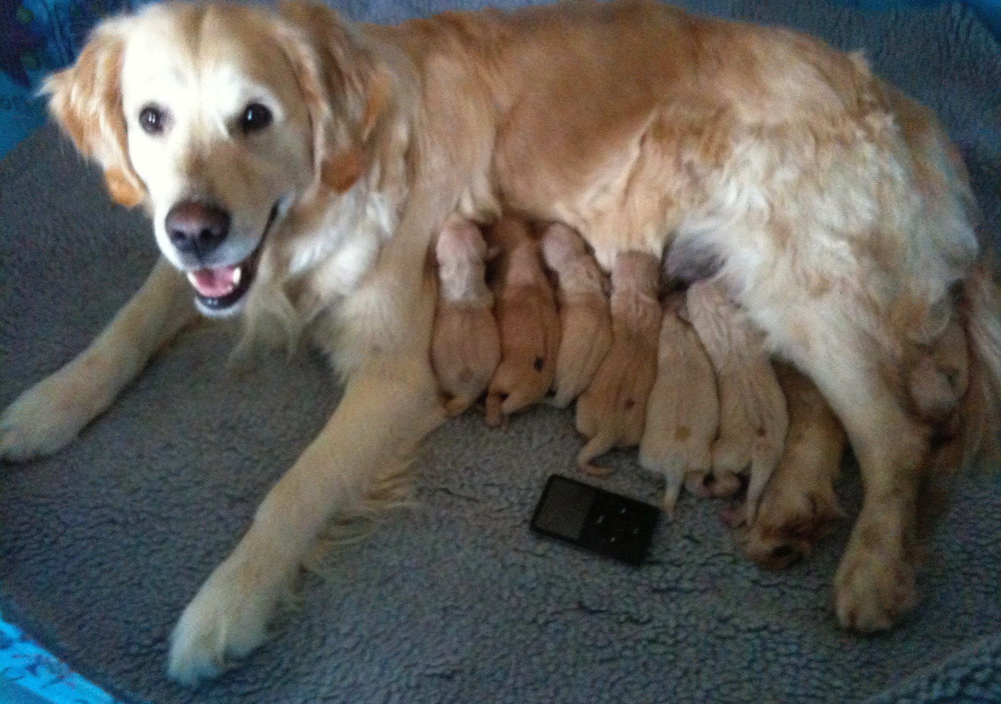 The Perfect Mom!