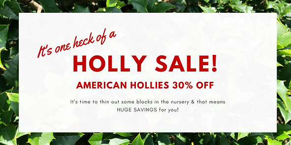 Holly Sale!.png