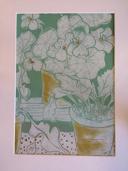 Nasturtiums in the Greenhouse