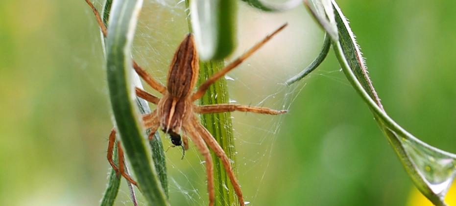 Insekten ziehen ein