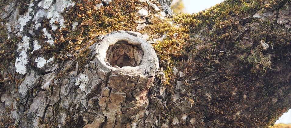 natürliche Nisthöhlen